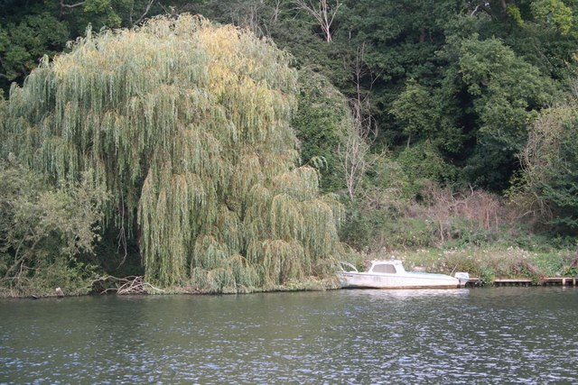 Boat by the willow
