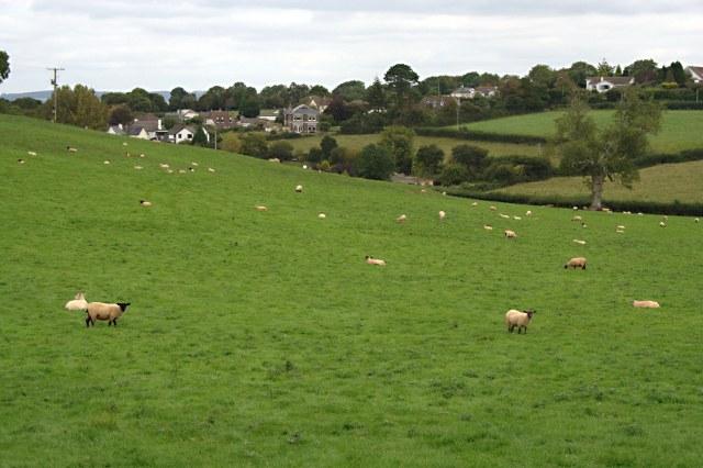 Fields Near East Ogwell