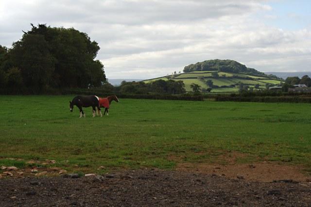 Horses Grazing near Rydon Farm