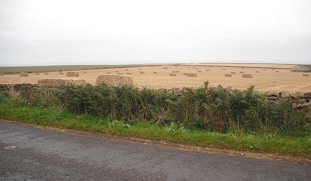 Square bales, Seafield