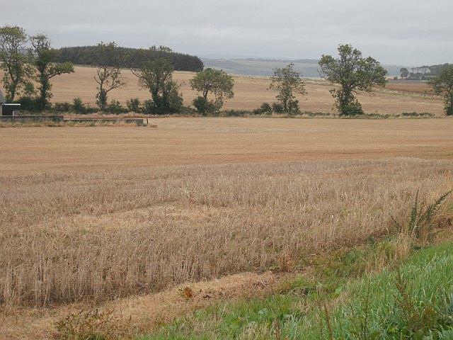 Barley stubble, Boghead