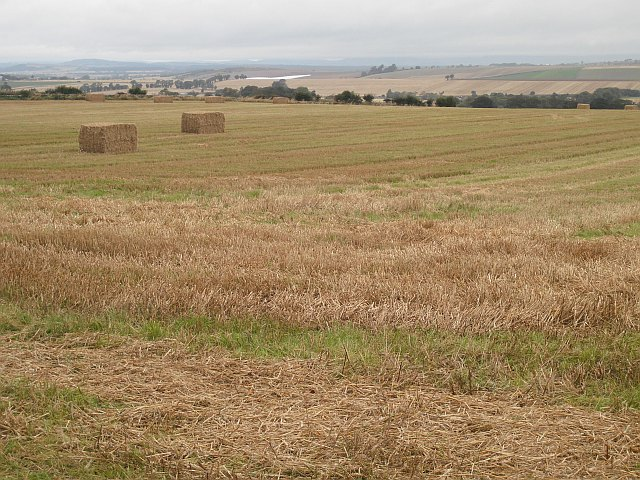 Barley stubble, Rosehill