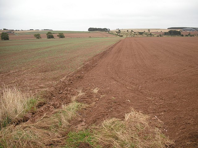 Recently planted land, Ethie Barns