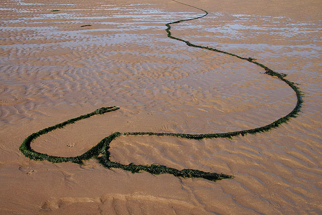An old rope on Cheswick Sands