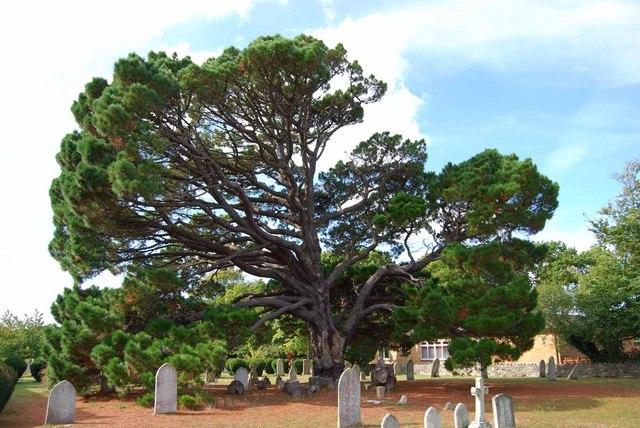 Tree or half a tree?