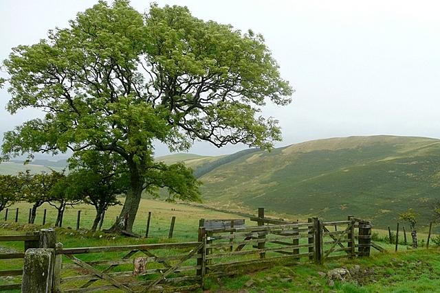 Towards Fawdon Dean