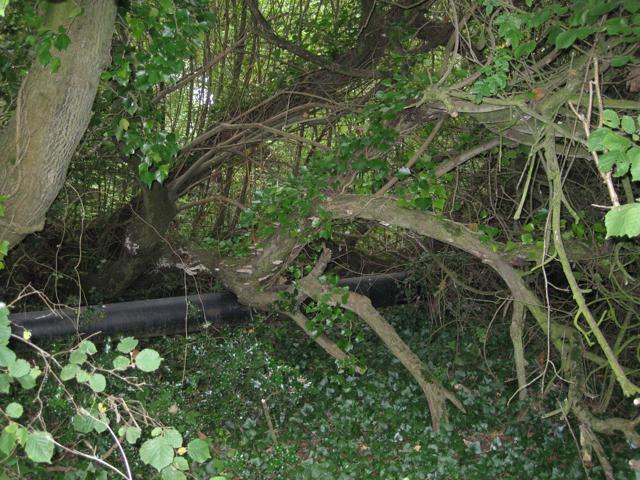 Pipe beside Shutterton Lane