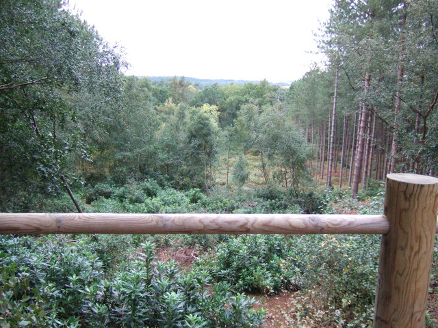 View through The Sandringham Estate forest