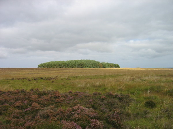 Moorland and plantation near Miller's Causeway