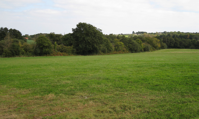 Field boundary near Shutterton Lane