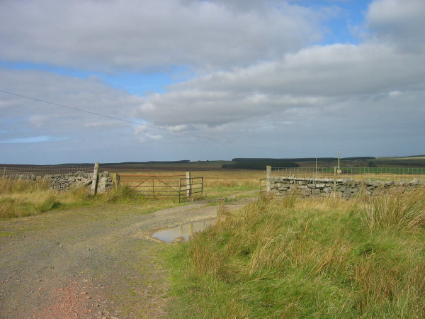 Cattle grid and gate