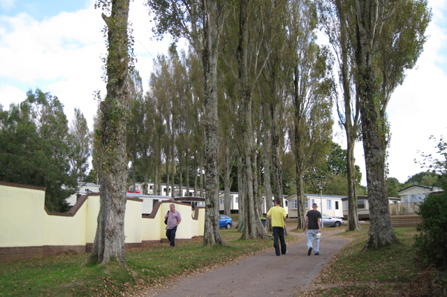 Lombardy Poplars at Golden Sands Holiday Park