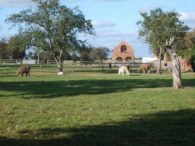 Llama Hall