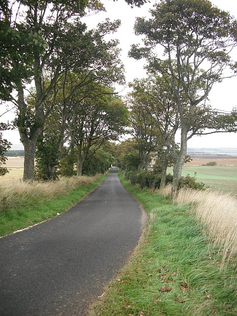 Treelined road, Inchock