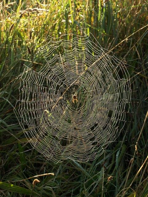 Spider's web near Aveton Gifford