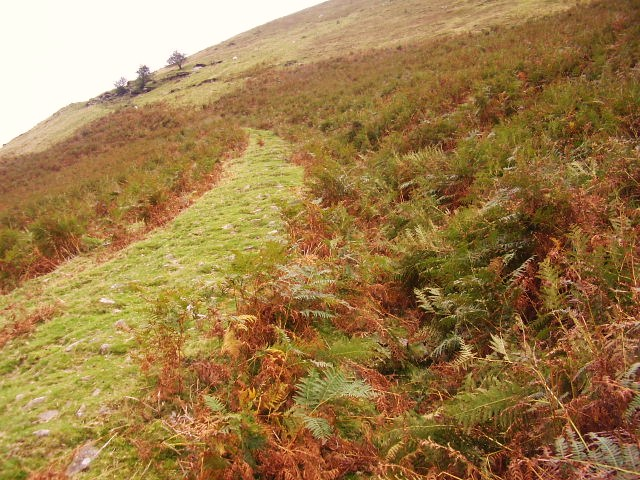 Ancient way up Hatterall Hill