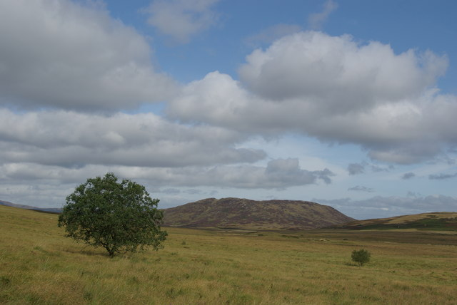 Isolated trees north of Grobdale of Girthon