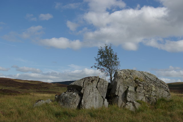 Rock outcrop & rowan at Brock Knowes