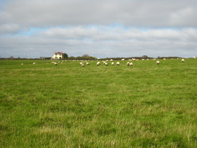 Sheep pasture south of the A30