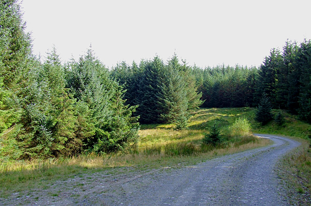 Tywi Forest road, Ceredigion