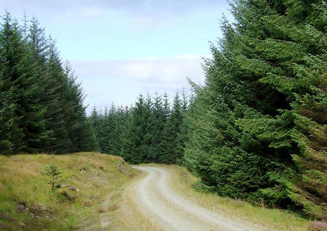 Forestry road on Bryn Mawr, Ceredigion