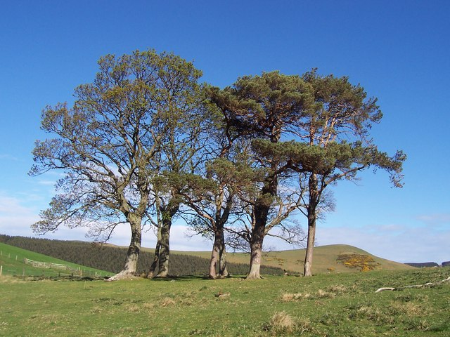 Trees alongside road to Trowupburn
