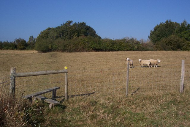 Stile and three sheep