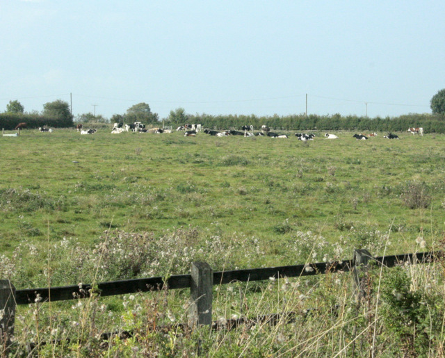 2009 : Pasture with cattle