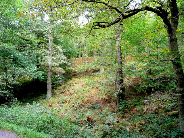 The Royal Forest of Dean