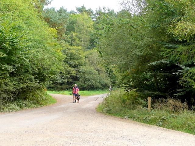 Man walking large dog; Forest of Dean