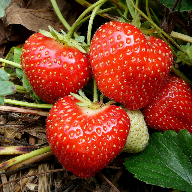 September strawberries