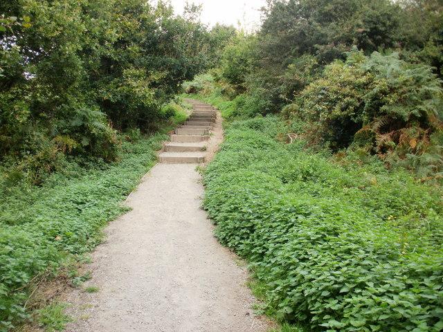 Steps on nature trail, Malpas