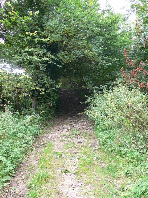 Bridleway to Llyn Cyfynwy