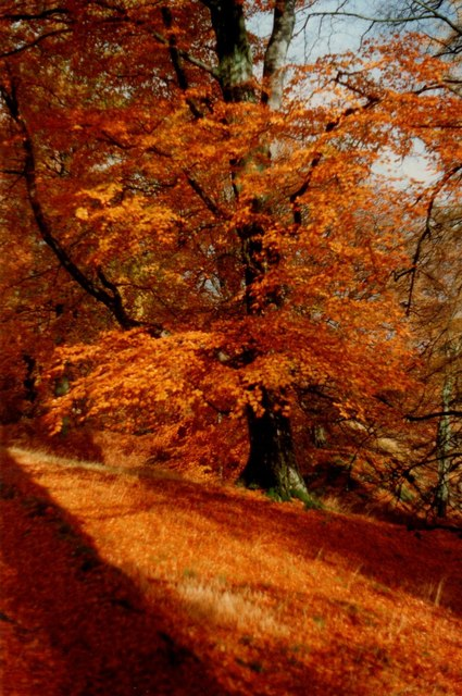 Glorious November colour near Glenridding