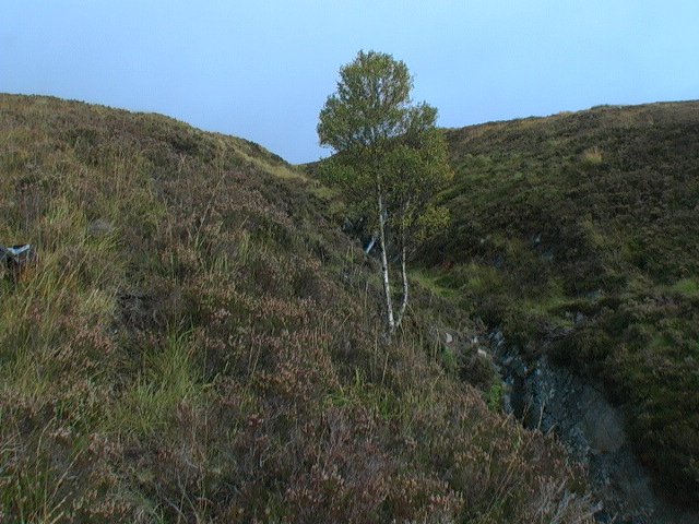 Lone tree in Coire Beithe