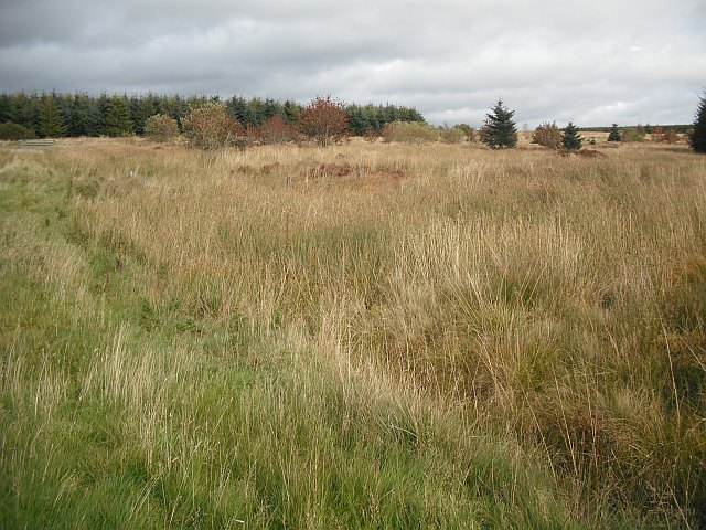Edge of woodland, Fellside