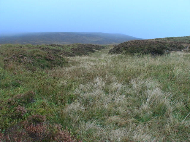 Peat hagg colonized by grasses