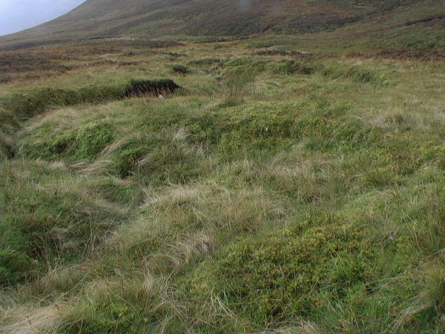 Grassy meanders in minor burn course in Coire Beithe
