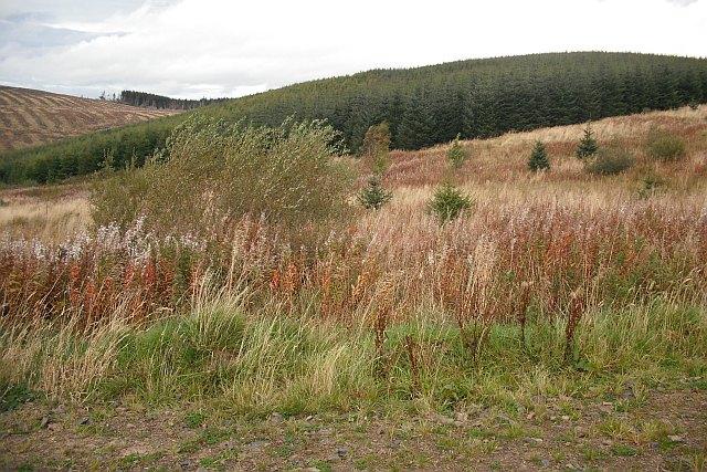 Wauchope Forest: Wardmoor Hill