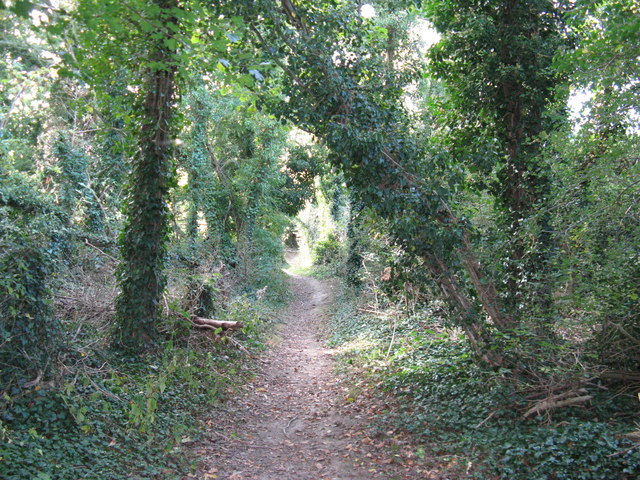 Tree lined footpath at The Vale