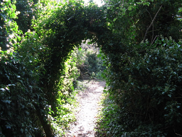 Natural Ivy arch over path near Findon Place