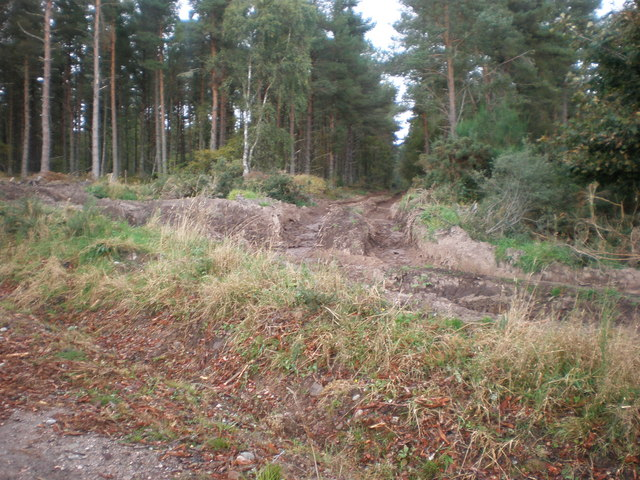 Forest path used for forest clear fell near Lamington