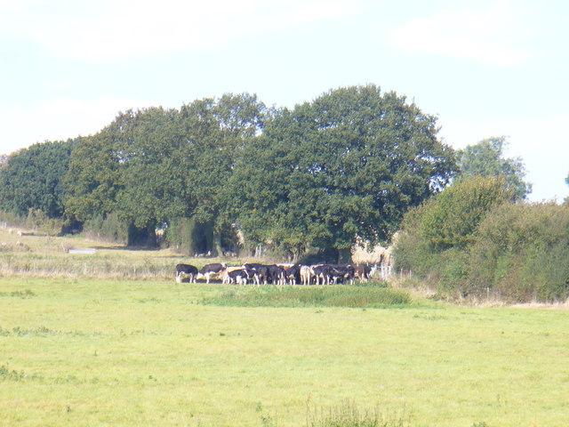 Grazing Beside the Hertfordshire Way