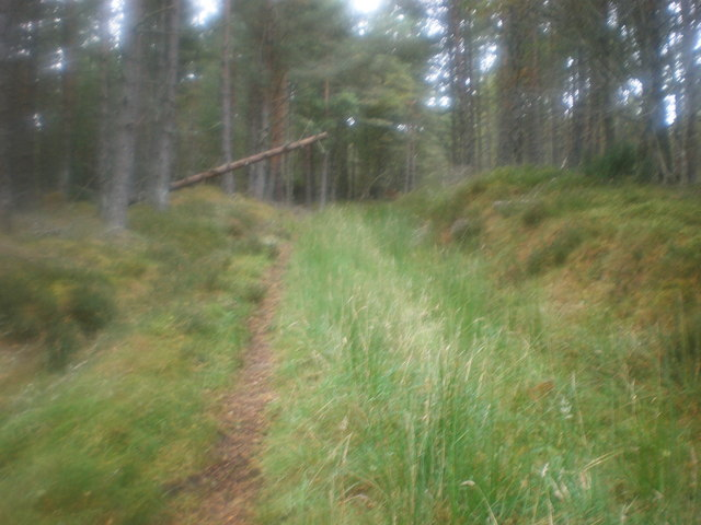 Old Forest Track near Marybank