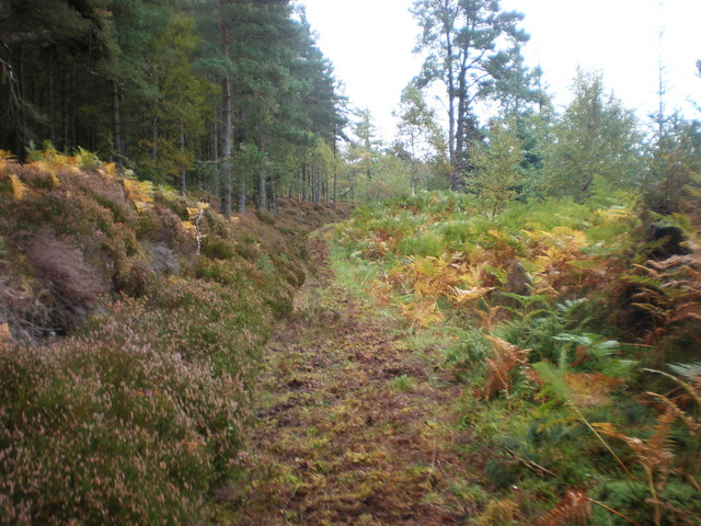 Old Forest Track in Scotsburn Wood