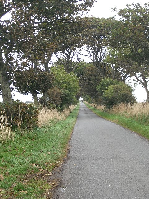 Tree lined road, Dunninald