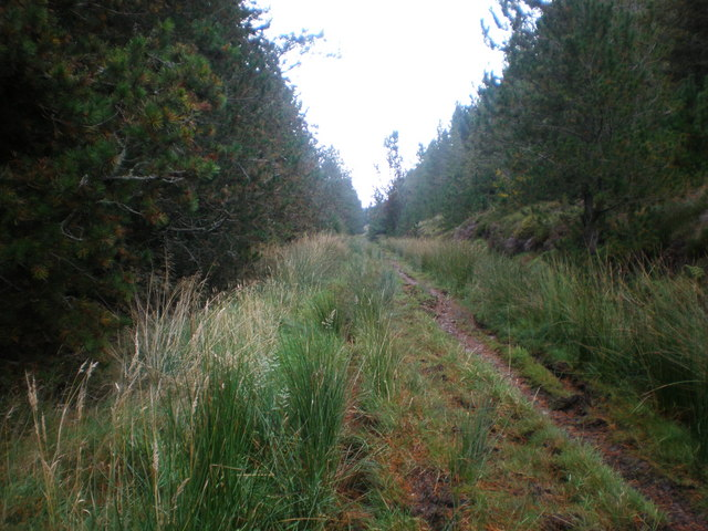 Forest Track south Glen of Scotsburn near Bearn a' Chlaidheimh