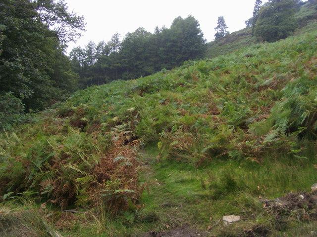Footpath through the Bracken