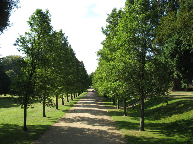 Tree avenue at Ashton Court Estate