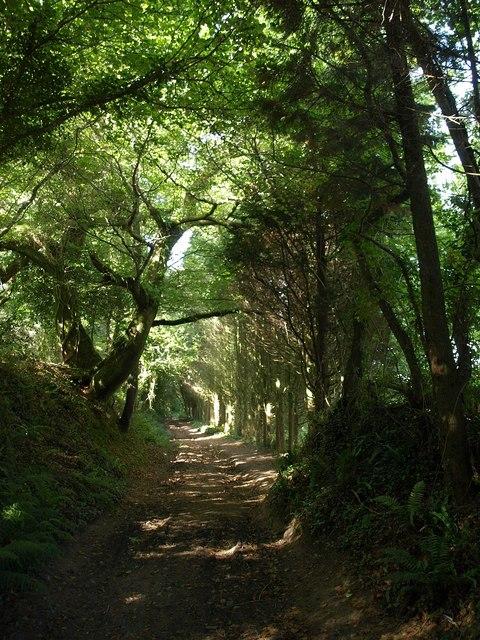 Bridleway near Okenbury
